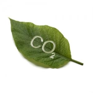 Carbon dioxide leaf
